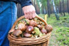 Двое луганчан скончались после употребления грибов