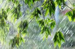 Идут дожди! Синоптики дали прогноз на неделю