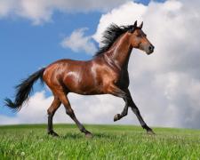 Под Харьковом лошадь носилась по лугу с бездыханным телом девятиклассницы