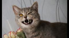 Бешеный кот закрыл на карантин пол-Харькова: в ужасе даже бывалые медики