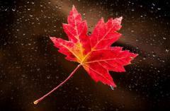Период с 5 по 15 октября: светлое пятно в судьбе четырех знаков Зодиака