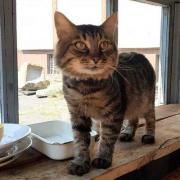 В днепровском историческом музее пропал сторож-кот