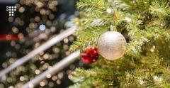 В Киеве заработали пункты приема новогодних елок
