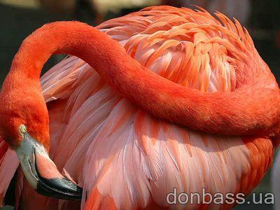 ������ ���������� ������� � ������� <strong>��������</strong> :: donbass.ua <strong>...</strong>