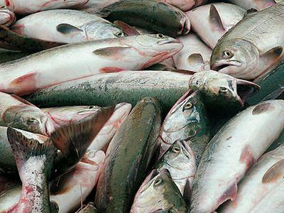Крымским рыбакам некому продавать свой улов