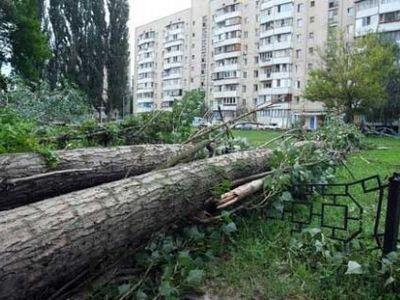 Еще 12 деревьев нельзя будет трогать в Киеве