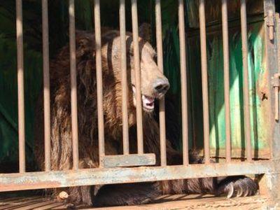 Зоопарк-концлагерь продолжает путешествовать по Украине