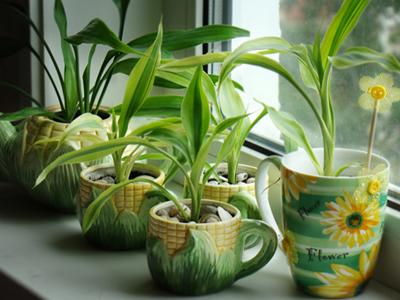 Как подобрать комнатные растения по