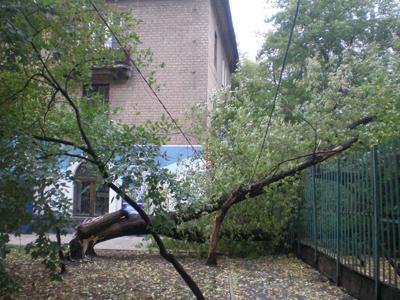 Сильный ветер завалил дерево возле школы.