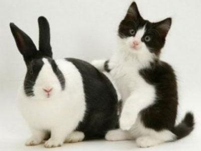 Кролик кот фото