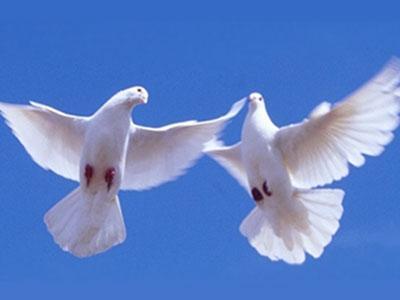 Самые популярные породы голубей Донецкой области