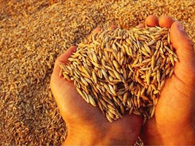 Из элеватора в Одесской области украли 13 тысяч тонн зерна