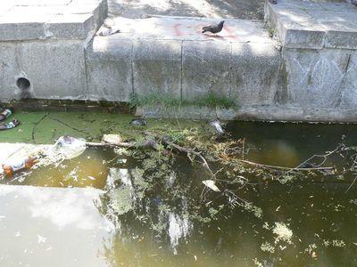 В Краматорске в фонтане плавают трупики голубей