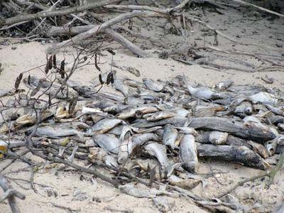 Азовская рыба спокойно пережила жару