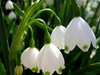 Цветы в крыму 89