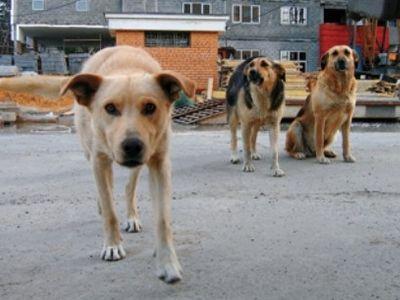 В Донецке французского болельщика покусала собака