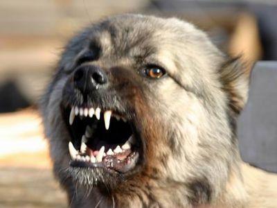 Злобный дончанин натравливает собак на людей