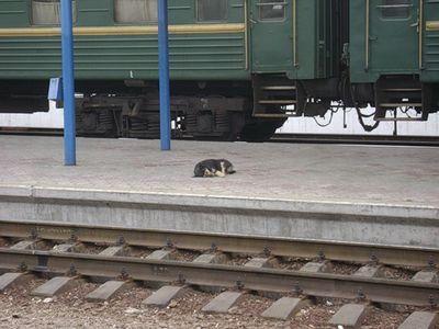 На краматорском ж/д вокзале собаки выхватывают у людей еду