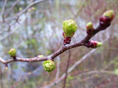 В ожидании весны Обсуждения погодных условий состояния