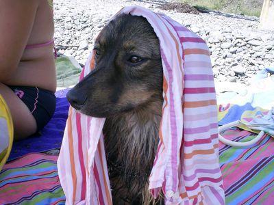 На крымских пляжах щенку нужна защита от солнца не меньше, чем ребёнку.