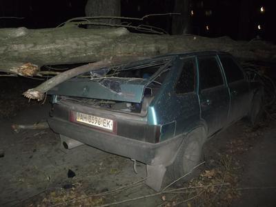 Дерево раздора и помятый ВАЗ. Коммунальщики отреклись от тополя, раздавившего авто (ФОТО)