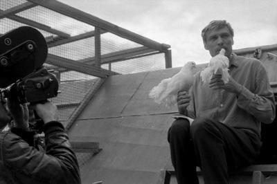 """Александр МИХАЙЛОВ с теплом вспоминает работу с голубями: """"Они у нас были замечательные. Настолько ко мне привязались - что хотели то и делали. Привезли мы их из Москвы, часть из них была дрессированная - не боялись ни меня, ни камеры""""."""