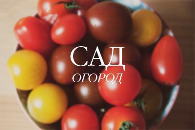 «Поторопите» томаты - получите больше здоровых плодов