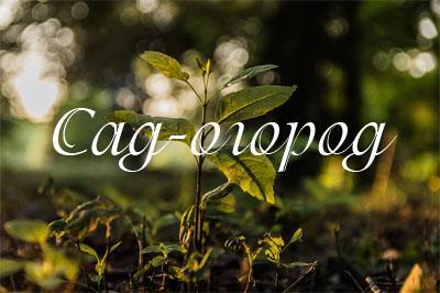 Высаживая деревья, запаситесь удобрениями и… картоном