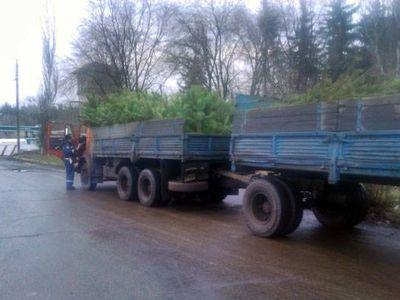 На блокпосту в Донецкой области тормознули подозрительные ёлки
