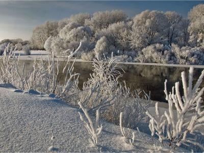 Погода в Украине на 8 января: сильный ветер и снег