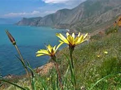 Дорогую крымскую землю получили люди Медведчука и  Ахметов