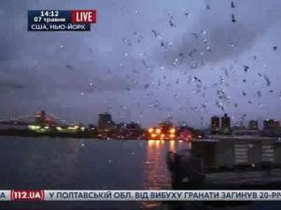 Тысячи светящихся голубей озарили небо над Нью-Йорком (ВИДЕО)