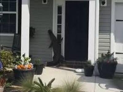 """В Южной Каролине """"вежливый"""" аллигатор позвонил в дверной звонок (ВИДЕО)"""
