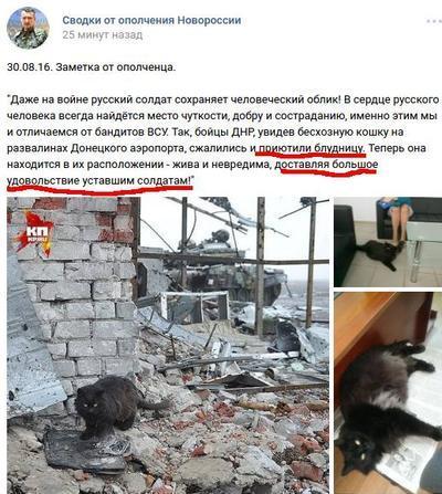 """Зоофилы? Боевики """"ДНР"""" хвастают, что """"кошка  доставляет большое удовольствие уставшим солдатам"""""""