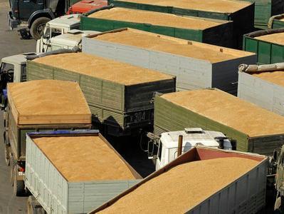 Россия увеличила вывоз зерна из оккупированного Донбасса