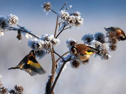 Погода в Украина на 2 января: на востоке снег, на западе переменная облачность