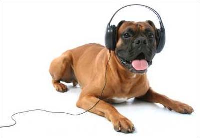 Определена любимая музыка собак