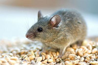 Учёные назвали самое первое домашнее животное