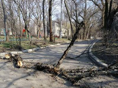 В Краматорске сухое дерево упало на коляску с ребенком