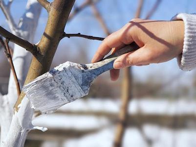 Весна: надо ли белить деревья?