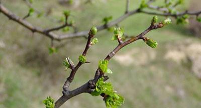 Синоптик: с 10 апреля в Украине будут рекордные скачки температуры