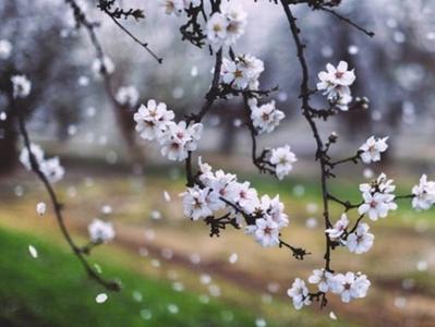 Прогноз погоды в Украине 21 апреля: ожидаются дожди и мокрый снег
