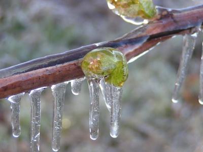 Аграрный комитет Рады обратится к премьер-министру с просьбой возместить потери садоводам из-за весенних заморозков