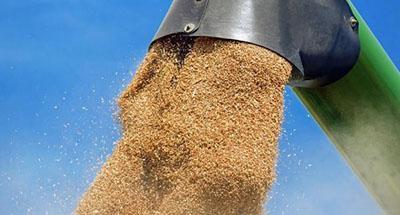 В ОБСЕ рассказали, как оккупанты вывозят с Донбасса в РФ грузовики с пшеницей и подсолнечником