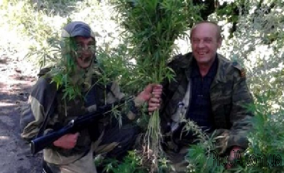 В Горловке боевики массово выращивают коноплю и нанимают «на работу» бомжей