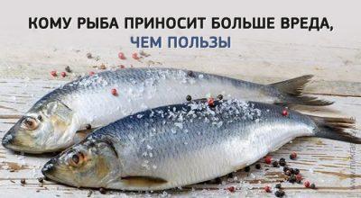 Какую рыбу есть, чтобы получить больше пользы, чем вреда