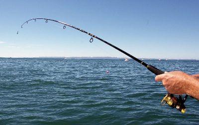 У Флориді п'яна дівчина клюнула на вудку рибалки  Детальніше