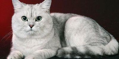 Ученые считают, что кошка одновременно владеет пятью личностями
