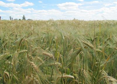 Под Мариуполем фермер незаконно занял 40 гектаров земли