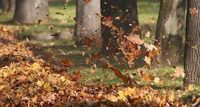 Прогноз на 14 сентября: шквалистый ветер и снова потепление